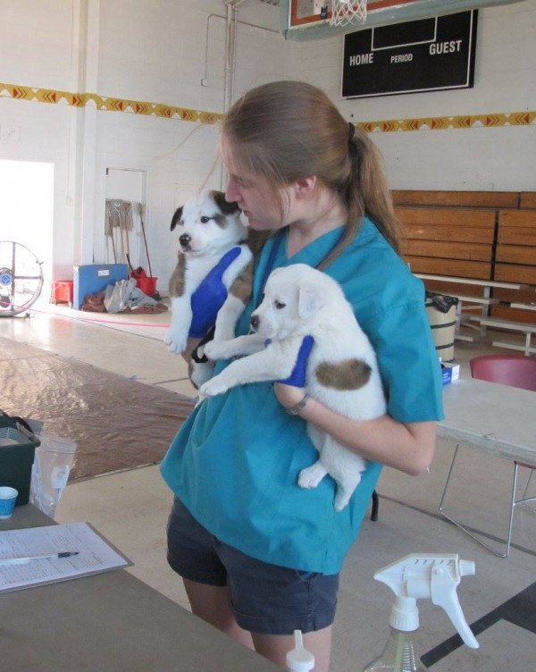 Anna Hill, working with the Humane Society Veterinary Medical Association (HSVMA) Remote Area Vet...