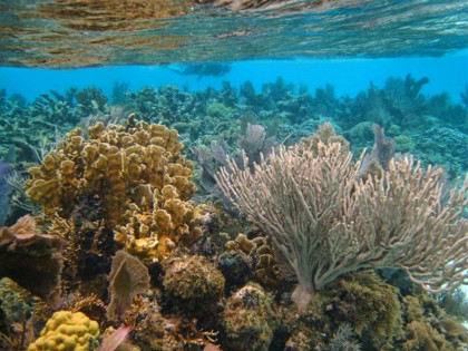 The barrier reef off the coast of Belize is remarkable for its biodiversity and beauty. The fish ...