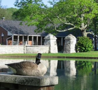 A Canada Goose makes himself at home at the E&H Duck Pond.