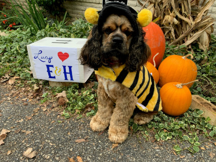 From  Rebecca Smith DeBusk '83: Lucy is our pandemic puppy that has brought a lot of joy to us!