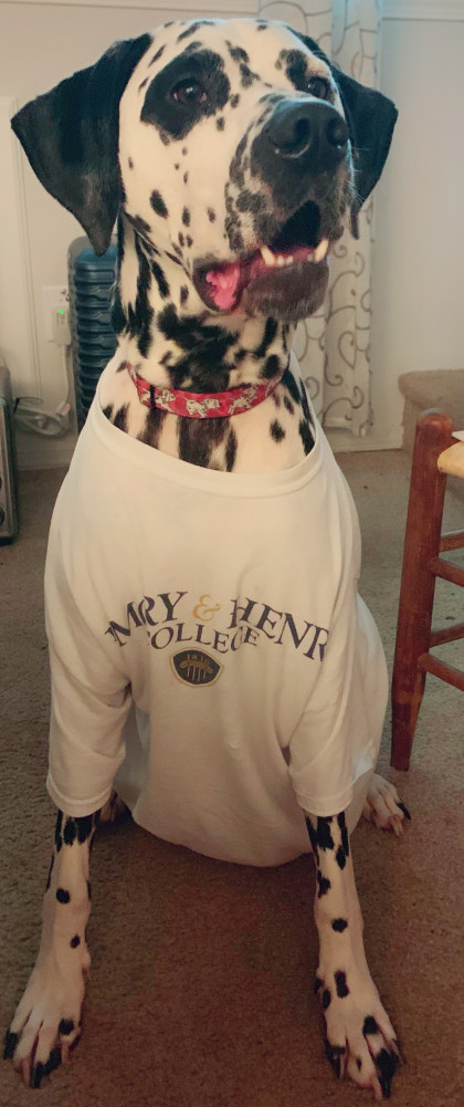 From Stephanie Taylor '16: Henry is named after E&H and he loves to model his Emory gear!