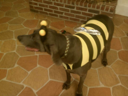 From  Betty Rosenbaum Jessee '96: Mosby was celebrating Homecoming 2011! 🐝