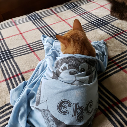 From Sara Jones Kegley '83: Henry enjoys curling up in his Mom's 1980 nightgown first used h...