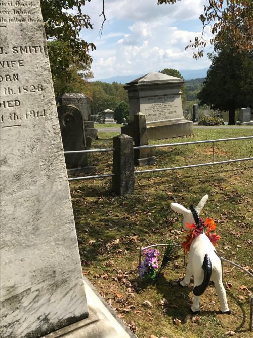 Emory's concrete pony