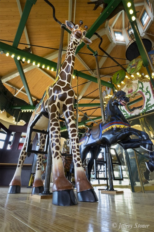 Rothschild the Giraffe stands tall on the Kingsport Carousel