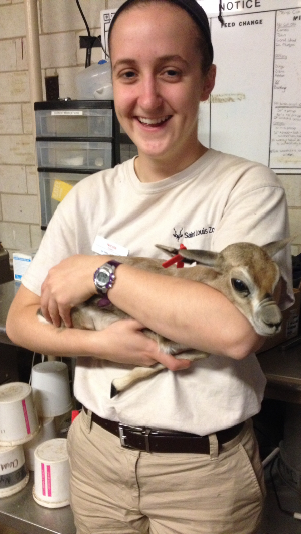 Nicole Powell, E&H Class of 2016, in a photo taken during her zoo internship in St. Louis.