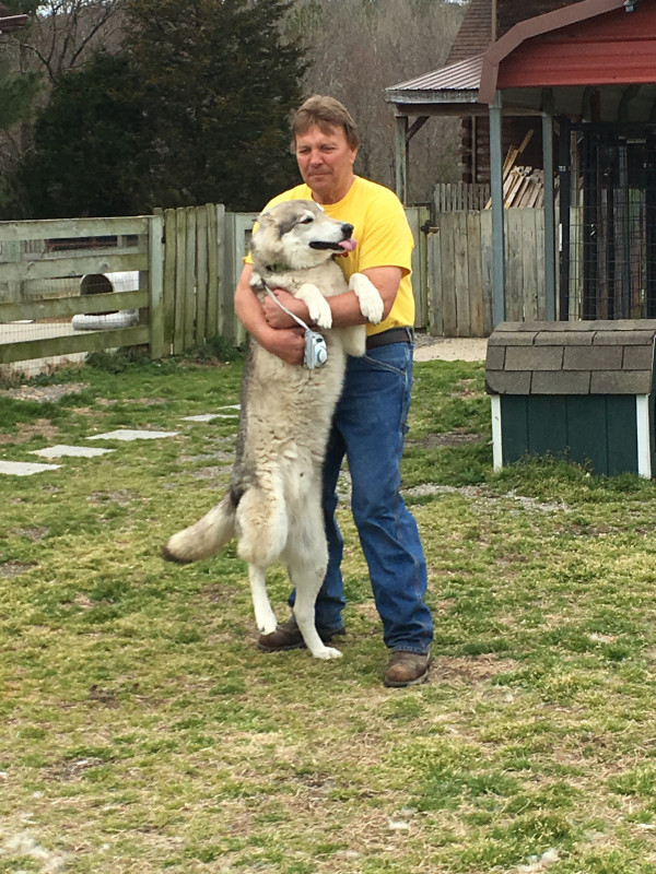 David Harless with one of his favorite dogs at BARK (actually a Wolf).