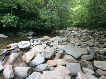 A river located in the Great Smoky Mountain National Park, one of the parks where the salamander data we used was collected