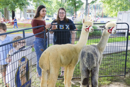 Don't miss the alpacas!