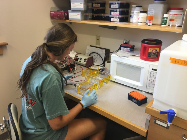 Taylor Blevins doing research in the Biology lab.