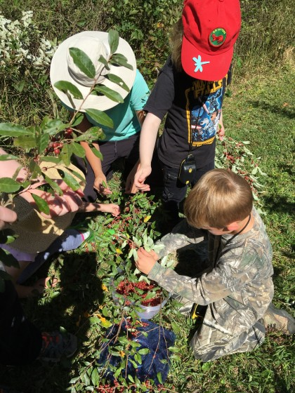 Young scouts picking berries.
