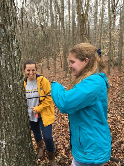 Students using an increment borer to collect a tree core.